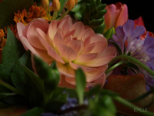 Bouquet automnale, dahlia, freesia, scabieuse, asclepia, feuilles de chêne