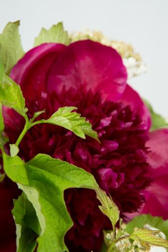 bouquet champêtre pivoine red charm
