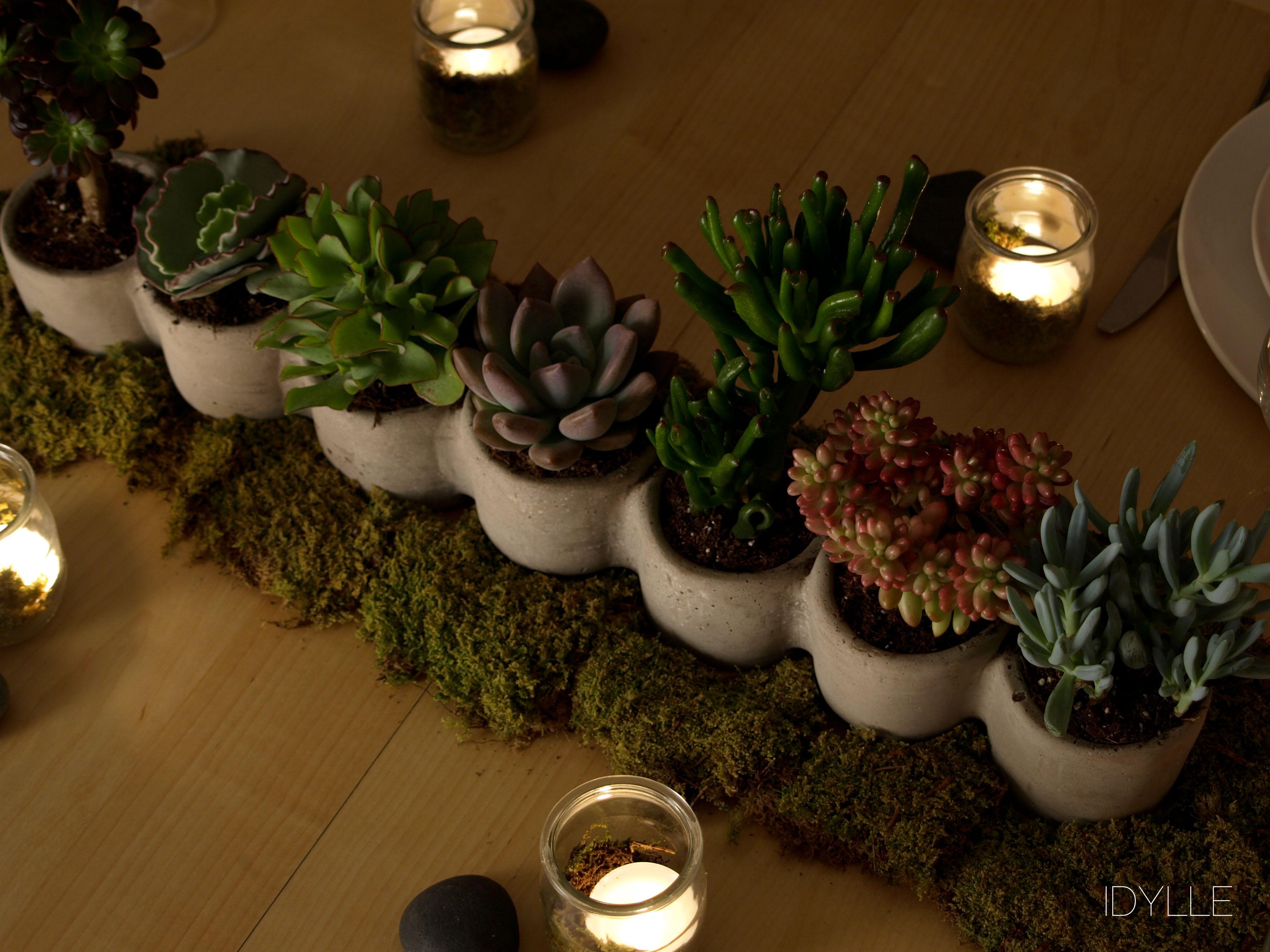 Plante grasse idylle fleuriste for Accessoire plante interieur